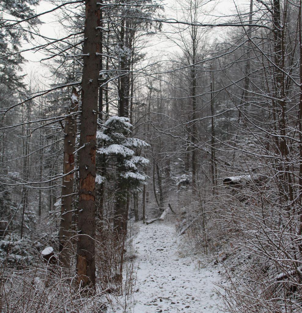 górski las zimą